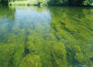 Nutrients in the effluent